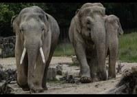 Ostravská zoo má nového slona