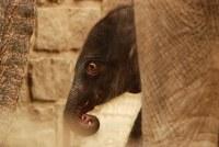 Druhé slůně v Zoo Ostrava je na světě!