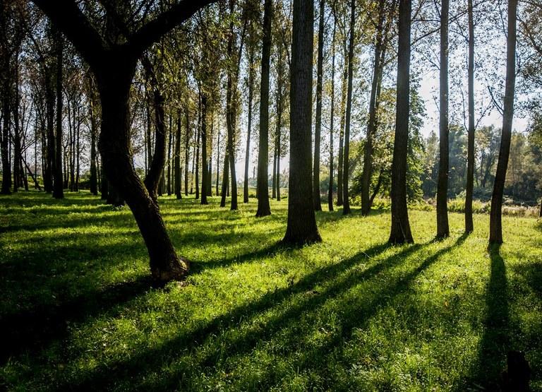 Nová zeleň přispěje ke zlepšení ovzduší v Ostravě
