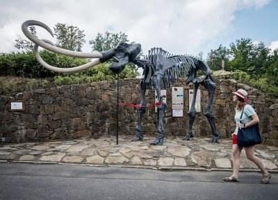 Přijďte si do zoo prohlédnout mamuta