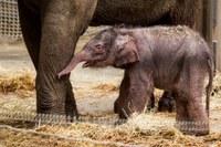 Sloní kluk se jmenuje Chandru – Měsíc