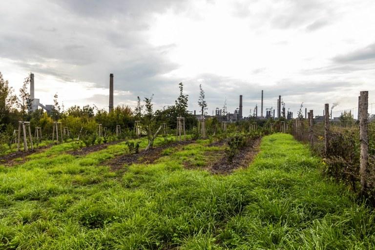 V rámci unikátního výzkumného projektu Clairo byly v Ostravě vysazeny stovky stromů.
