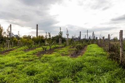 V rámci unikátního výzkumného projektu Clairo byly v Ostravě vysazeny stovky stromů