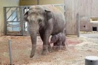 V zoo se narodil sloní sameček