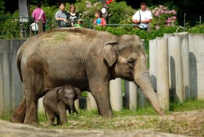Zoo Ostrava celebrates 60th anniversary